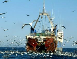 Большая рыбалка: Севастопольский рыбный порт забрасывает сети